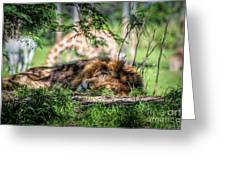 Living In Harmony - Lion Greeting Card