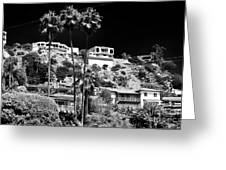 Living In The Hills Greeting Card