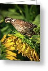 Living On Sunflowers Greeting Card