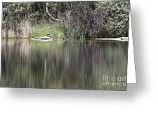 Living On The Pond Greeting Card