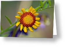 Living Sunshine Greeting Card