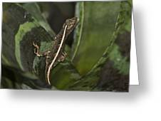 Lizard 2 Greeting Card