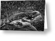 Lizard-bw Greeting Card