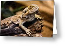 Lizard - Id 16217-202733-1873 Greeting Card