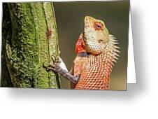 Lizard In Maldive Greeting Card