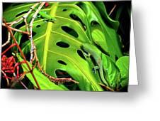 Lizard Licks  Greeting Card
