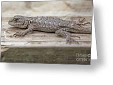 Lizard On Deck Greeting Card