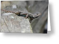 Lizard On Wood Fence Shiloh Tennessee 031620161698 Greeting Card