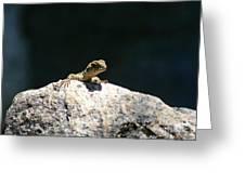 Lizard Rock Greeting Card