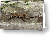 Lizard Tanning Greeting Card