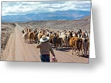 Llama Herd On Road Greeting Card