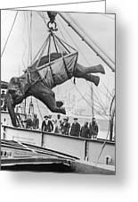 Loading Elephant, 1930s Greeting Card