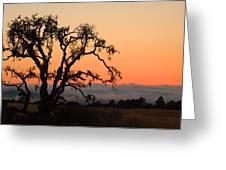Loan Tree Overlooking Fog Greeting Card
