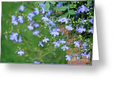 Lobelia Flowers Greeting Card