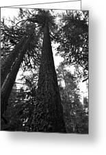 Lofty Tree Greeting Card
