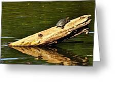 Log Turtle L 3584 Greeting Card