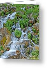 Logan Canyon Cascade Greeting Card
