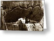 Logger With Ax On Springboard Loggers Sitting Inside Undercut  Circa 1890 Greeting Card