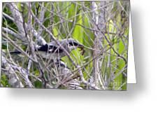 Loggerhead Shrike With Dinner Greeting Card