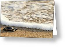 Loggerhead Turtle Hatchling 3 Delray Beach Florida Greeting Card