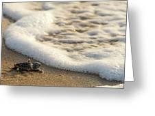 Loggerhead Turtle Hatchling 4 Delray Beach Florida Greeting Card