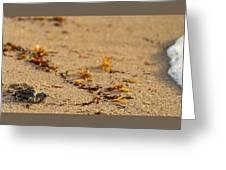 Loggerhead Turtle Hatchling Delray Beach Florida Greeting Card