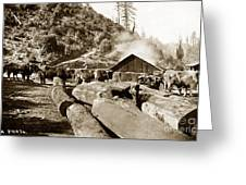 Logging With Oxen At A Saw Mill Sonoma County California Circa 1900 Greeting Card