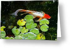 Loi With Lily Pads C Greeting Card
