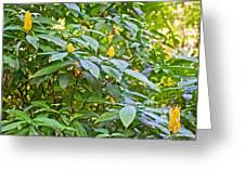 Lollipop Bush In Bourbon Resort Gardens Near Iguazu Falls National Park-brazil  Greeting Card