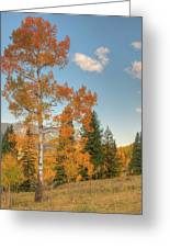 Lone Aspen Greeting Card