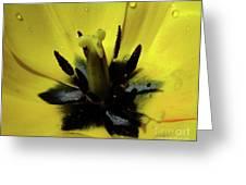 Lone Beauty - Tulip Greeting Card