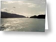 Lone Bird Over Marlborough Sounds Nz Greeting Card