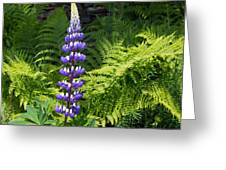 Lone Blue Lupine Greeting Card