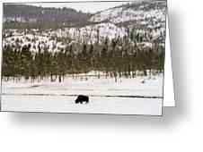 Lone Buffalo Greeting Card