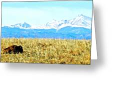 Lone Buffalo Watching The Rocky Mountains Greeting Card