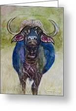 Lone Cape Buffalo Greeting Card