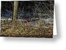 Lone Cardinal Greeting Card