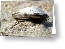 Lone Clam Greeting Card