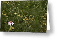 Lone Cone Greeting Card