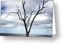 Lone Dead Tree Greeting Card