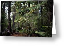 Lone Dogwood Greeting Card