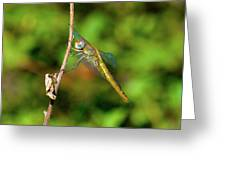 Lone Dragonfly Greeting Card