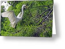 Lone Egret Greeting Card