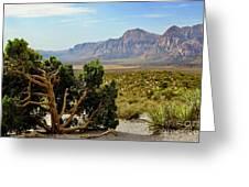 Lone Juniper At Red Rock Greeting Card