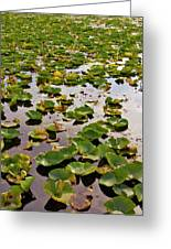 Lone Lake Lily Pads Greeting Card