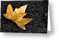 Lone Leaf Greeting Card by Carlos Caetano