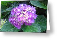 Lone Lilac Greeting Card