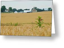 Lone Milkweed Greeting Card