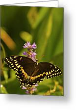 Lone Monarch Greeting Card