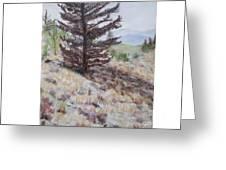 Lone Mountain Tree Greeting Card